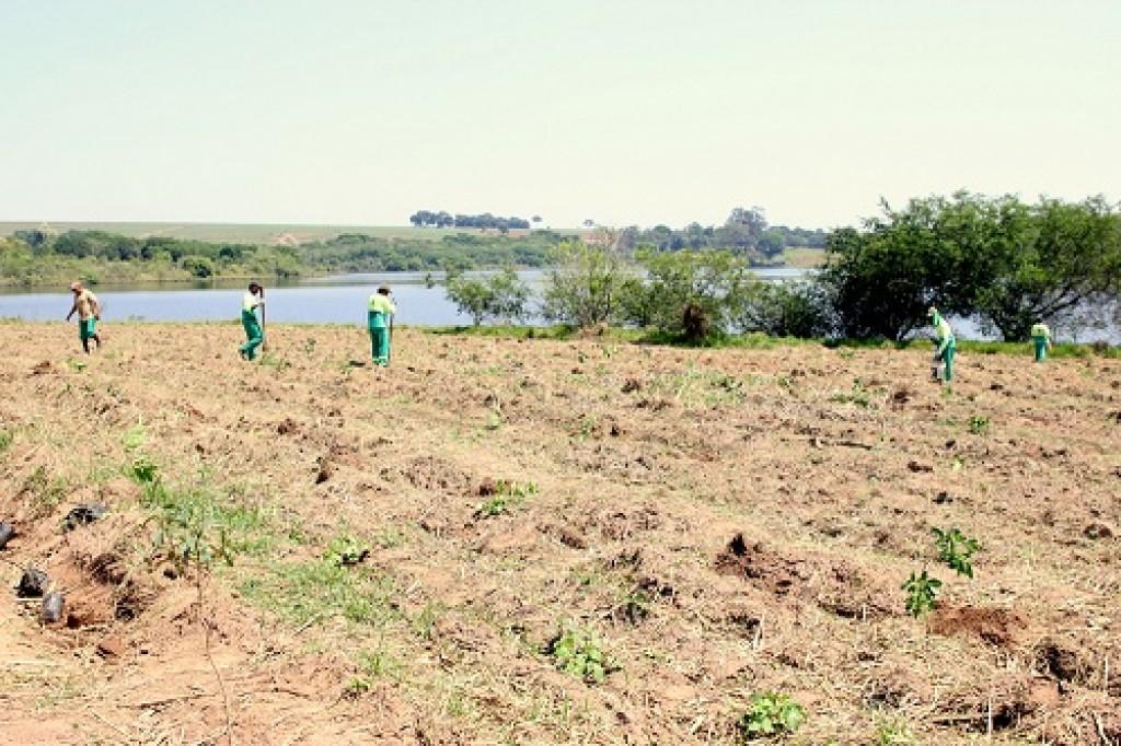 Cidades - DAE intensifica restauração de mata ciliar na Represa Areia Branca