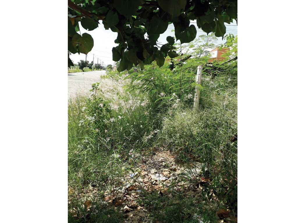 Cidades - Moradores reivindicam limpeza de terreno no San Marino