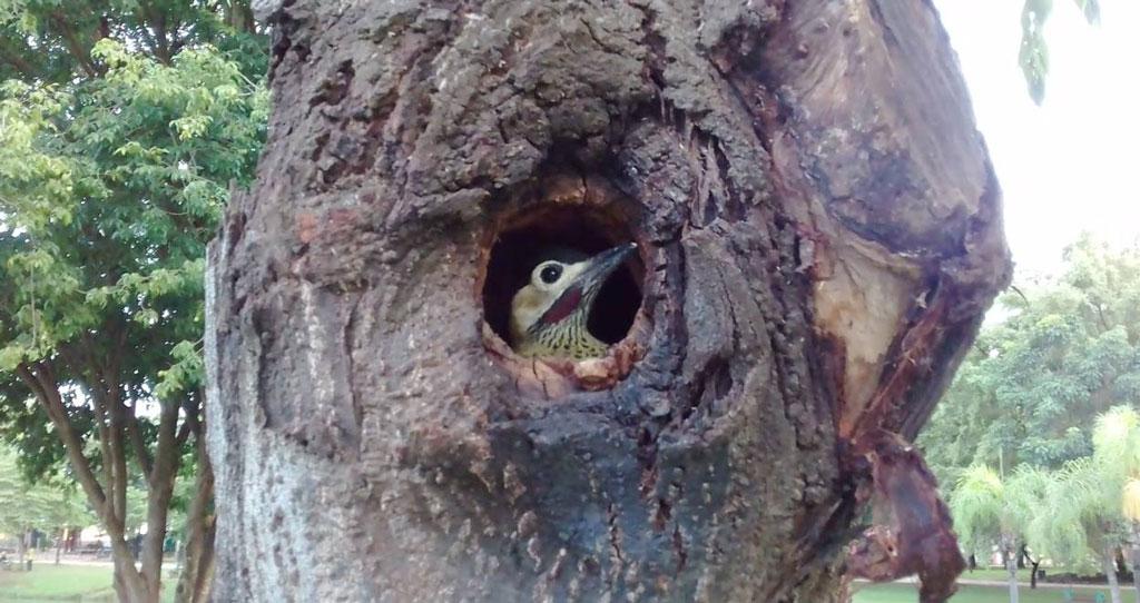 Foto Do Dia - Berçário de aves