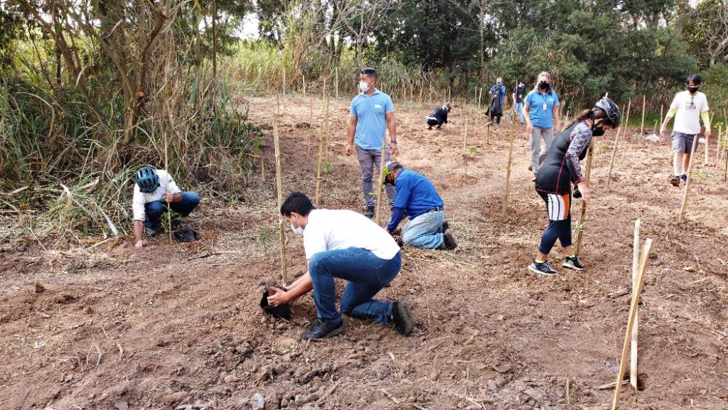 Cidades - DAE promove plantio em área de nascente