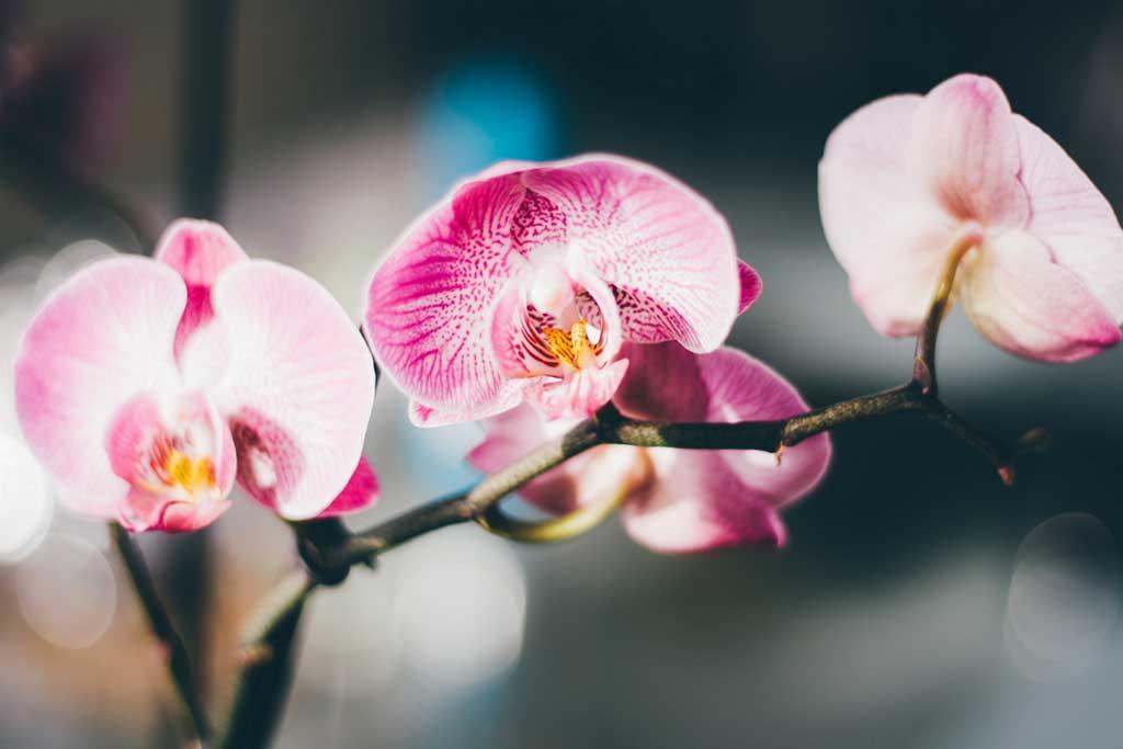 Caderno Mulher - Flores precisam de cuidados especiais na estação mais quente do ano