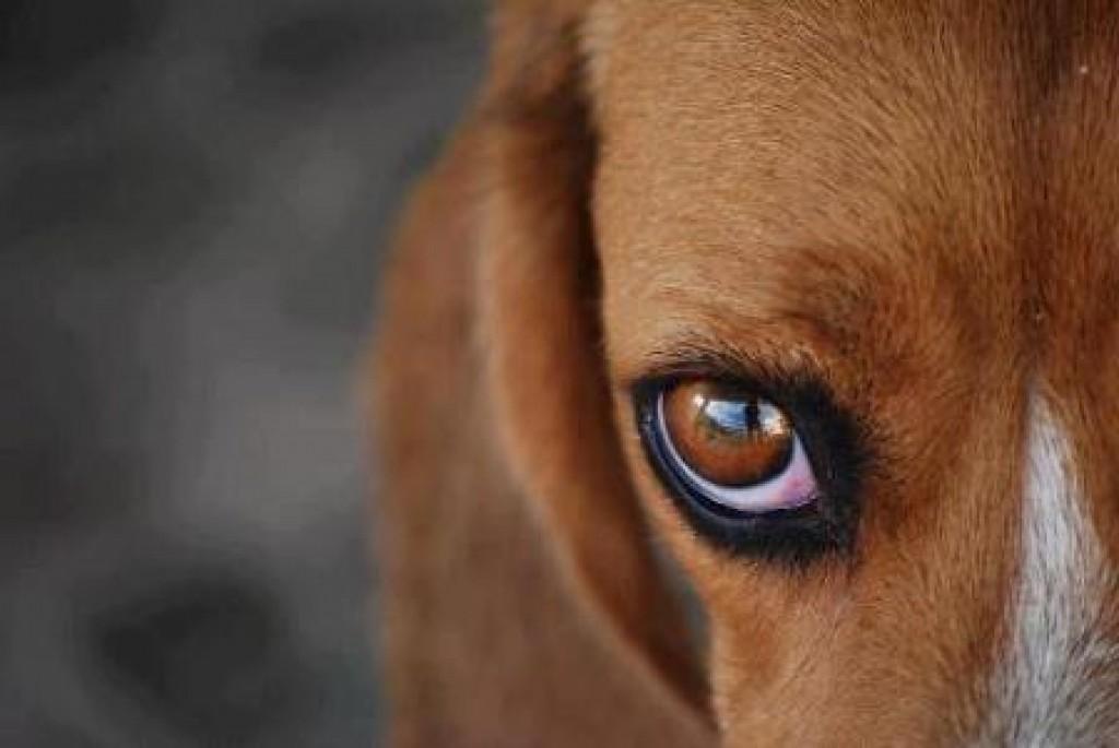 Política - Projeto que aumenta multa para abandono e maus tratos de animais será votado hoje