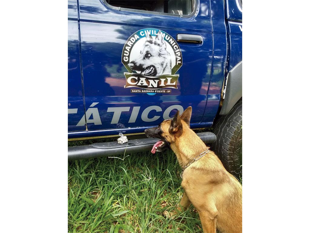 Polícia - Cachorra da guarda localiza drogas em praça